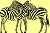斑马斑马吉他谱 宋冬野斑马斑马吉他谱 附视频示范